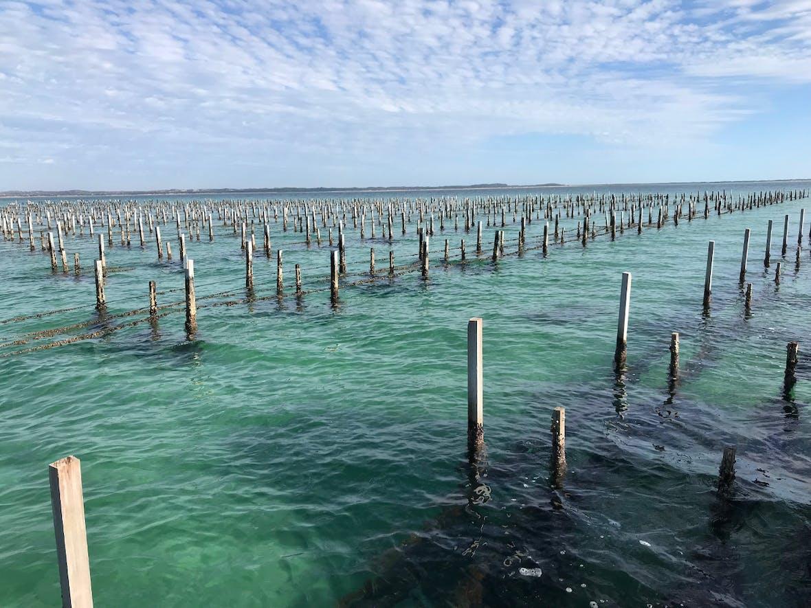 Bonafide: Pazifische Austern - Wie viel besser könnten sie schmecken?