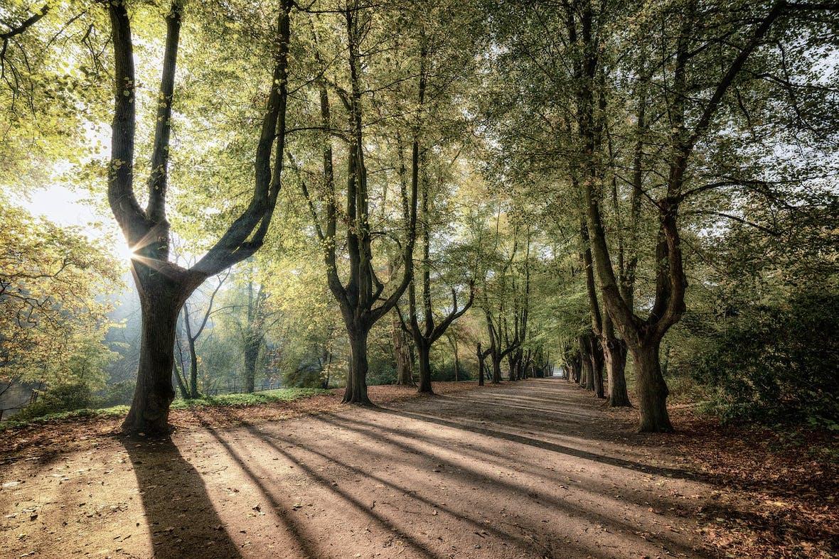 Für Finanzberater werden Nachhaltigkeitskenntnisse zum Erfolgsfaktor