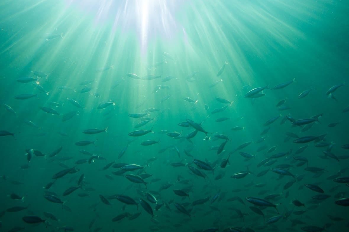 Bonafide Global Fish Fund räumt zwei Awards ab