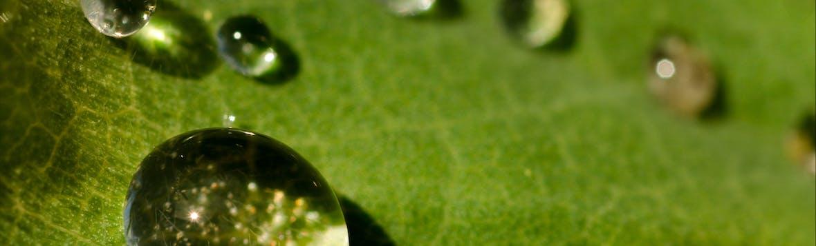 ESG-Fonds: Worauf man bei der Auswahl achten sollte