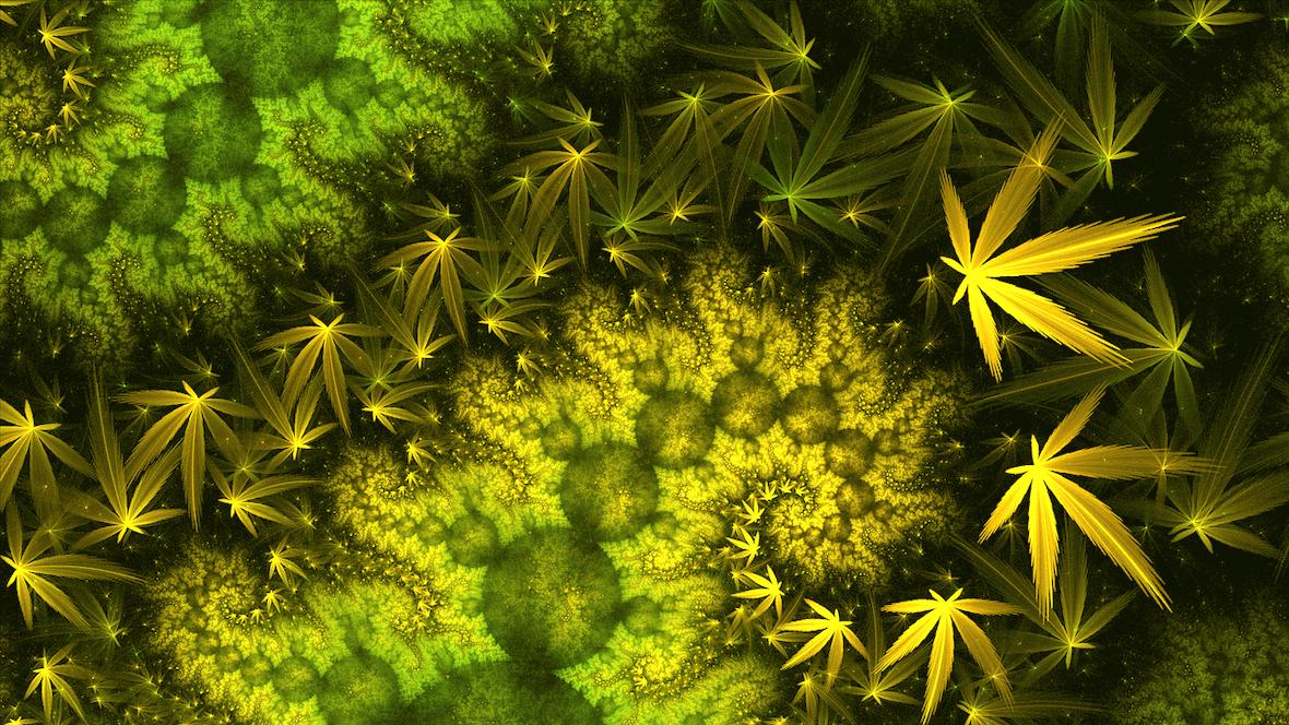 Börsen-Rausch: Cannabis-Legalisierung lässt Aktien boomen