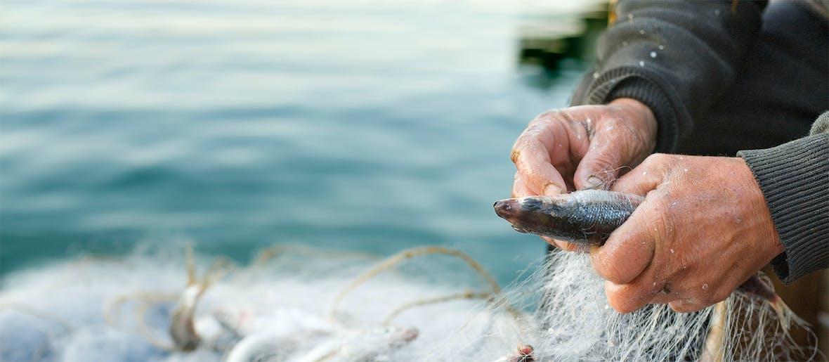 FAO prognostiziert Anstieg der Fischpreise - Bonafide Monatskommentar per August 2018