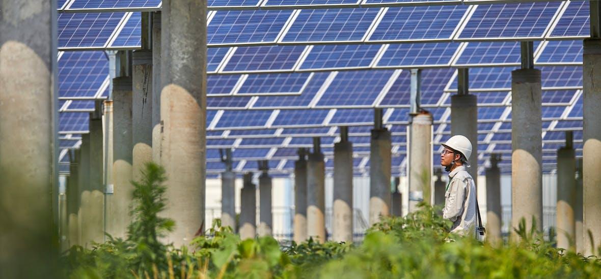 217 Milliarden US-Dollar Wachstum: Die Erfolgsgeschichte der AXA Green Bonds