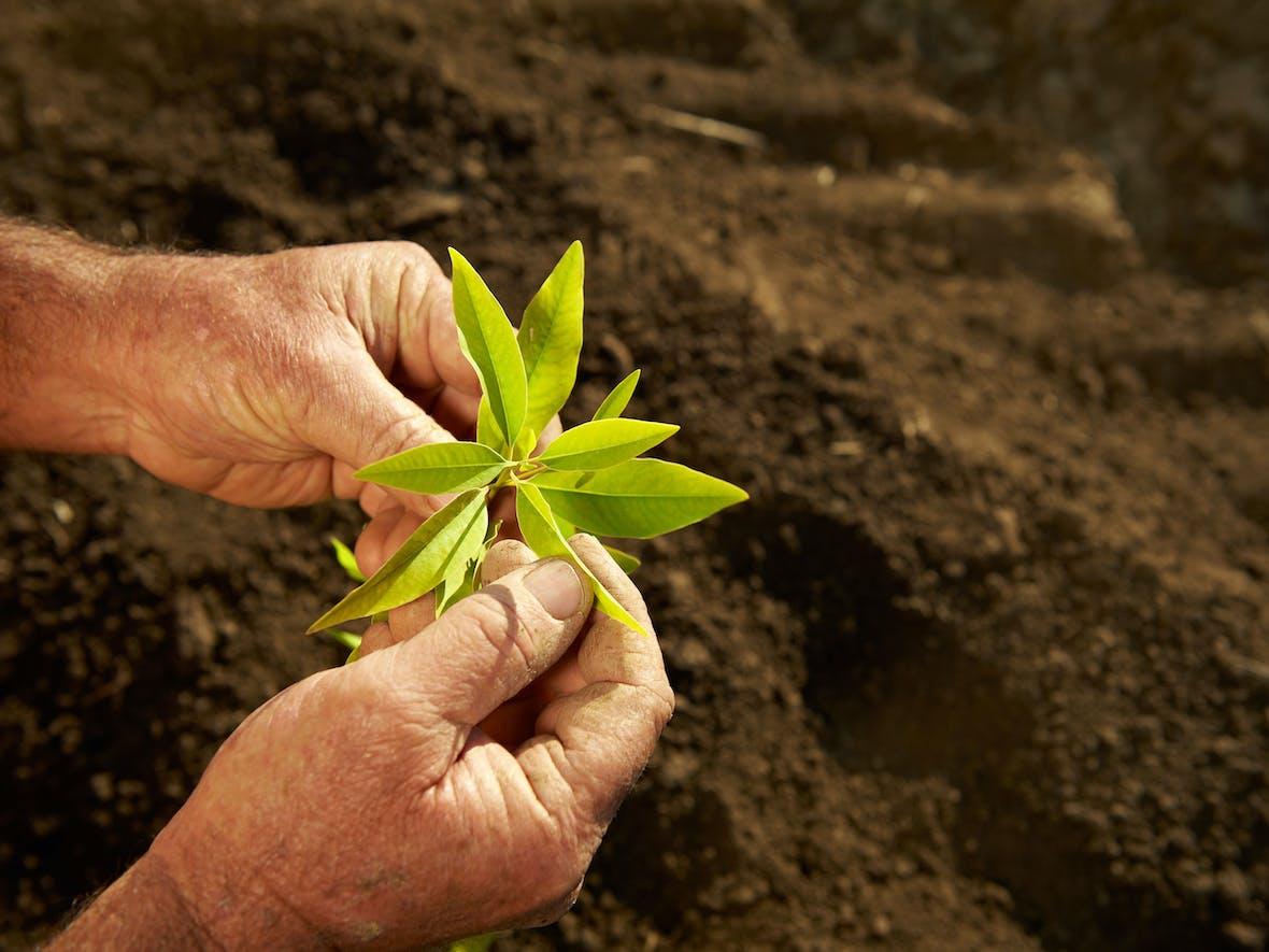 Nachhaltige Rendite durch Knappheit